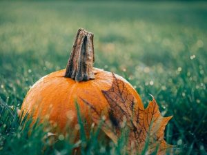 The pumpkin used to decorate your LV home for Thanksgiving
