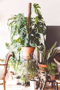plants as one of the items you should leave behind when moving